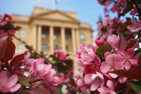 Pink flowers in front of European style building with soft focus in background