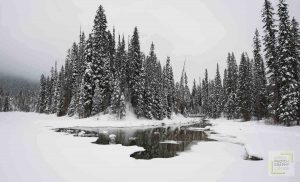 Snow covered trees behind frozen lake with small bridge