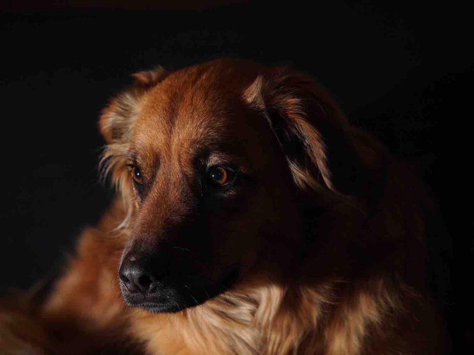Understanding Flash Photography – The Basics