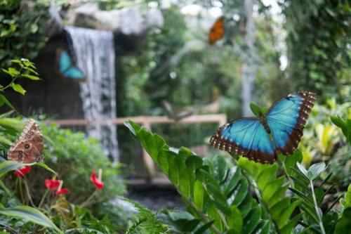 cambridge-butterfly-conservatory-2-500x333